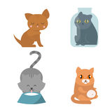 Cute cats character different pose funny animal domestic kitten vector illustration. Pet feline portrait fluffy young adorable mammal whisker pussy cartoon Stock Photos