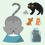Cute cats character different pose funny animal domestic kitten vector illustration. Pet feline portrait fluffy young adorable mammal whisker pussy cartoon Stock Photo
