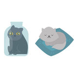 Cute cats character different pose funny animal domestic kitten vector illustration. Pet feline portrait fluffy young adorable mammal whisker pussy cartoon Royalty Free Stock Image