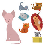 Cute cats character different pose funny animal domestic kitten vector illustration. Pet feline portrait fluffy young adorable mammal whisker pussy cartoon Royalty Free Stock Photo
