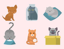 Cute cats character different pose funny animal domestic kitten vector illustration. Pet feline portrait fluffy young adorable mammal whisker pussy cartoon Stock Photography