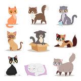 Cute Cats Character Different Pose Vector Stock Images
