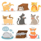 Cute cats character different pose vector set. Stock Photos