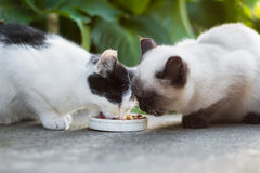 Cute cats eat Stock Images