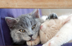 Cute cats / kittens Royalty Free Stock Images
