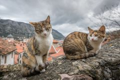 Cute cats of Kotor. Cute cats sitting on a stone stairs wall in the Kotor town in Montenegro royalty free stock photo