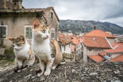 Cute cats of Kotor. Cute cats sitting on a stone stairs wall in the Kotor town in Montenegro stock photo
