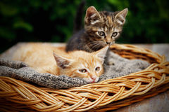 Cute cats laying in the basket Stock Photo