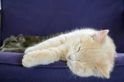 Cute cats Royalty Free Stock Photo