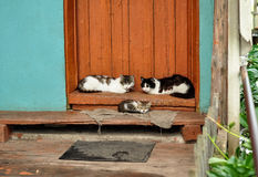 Cute cats lie on the porch of country house. Countryside scene. Village life Royalty Free Stock Images