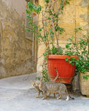 Cute cats in old street Royalty Free Stock Photos