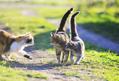 Cute cats playing in the green grass attacking each other Stock Photography