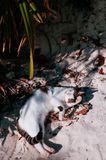Cat on sand beach of Kabira Bay, Ishigaki, Okinawa. Cute cats on sand beach under sunlight of Kabira Bay, Ishigaki, Okinawa Royalty Free Stock Image