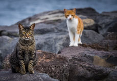 Cute cats. Sitting on the rocks on the ocean coast stock photos