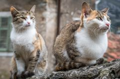 Cute cats of Kotor. Cute cats sitting on a stone stairs wall in the Kotor town in Montenegro stock image