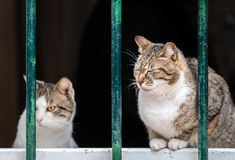 Cute cats of Kotor. Cute cats sitting on window pane in the Kotor town royalty free stock images