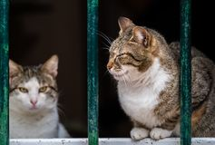Cute cats of Kotor. Cute cats sitting on window pane in the Kotor town royalty free stock photography