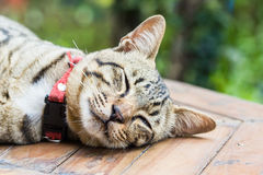 Cute cats are sleeping comfortably. Royalty Free Stock Image