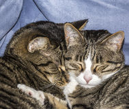 Cute cats sleeping on a sofa Royalty Free Stock Images