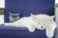 Cute cats sleeping together. Two cute cats / kittens sleeping together stock photo