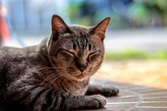 Cute cats are sleepy. In thailand royalty free stock image