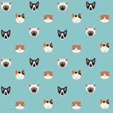 Cute cats vector pattern, illustration. S on colored background Stock Photography