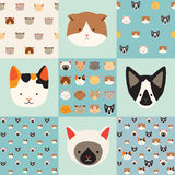 Cute cats vector pattern set. Illustrations on colored background. Cats icon Royalty Free Stock Photo