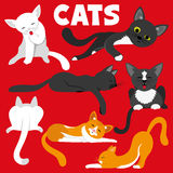Cute cats. Stock Image
