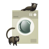 Cute cats with washing machine Royalty Free Stock Images