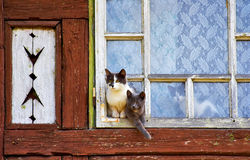 Cute cats watching outside Royalty Free Stock Image