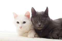 Cute cats. On a white background stock photography