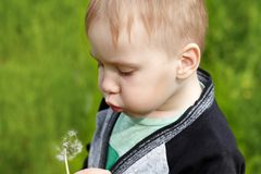 Cute caucasian blond baby boy with puffy cheeks blows on dandelion. stock photos