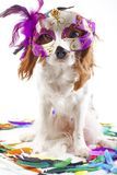 Cute cavalier king charles spaniel dog puppy on  white studio background. Dog puppy with carnival mask. Do pet. Animal party, concept Royalty Free Stock Images