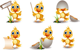 Cute chick cartoon collection Stock Photos