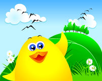 Cute chick, close up Royalty Free Stock Images