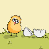 Cute chick with egg for Happy Easter celebration. Happy Easter celebration with cute chick with cracked egg on nature background Royalty Free Stock Images
