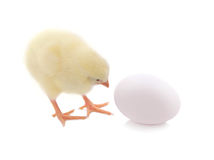 Cute chick and egg isolated on white background. Royalty Free Stock Photo