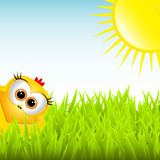 Cute chick in the grass Stock Images