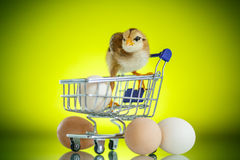 Cute chick in a trolley with eggs Royalty Free Stock Image