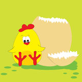 Cute chicken. Royalty Free Stock Photography