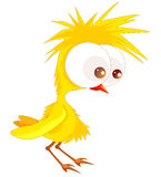 Cute chicken Royalty Free Stock Photo