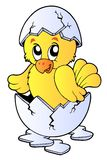 Cute chicken in broken eggshell Stock Image