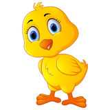 Cute chicken cartoon Royalty Free Stock Images