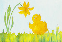Cute chicken and a daffodil flower Stock Photo
