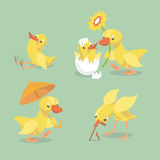 Cute chicken and duckling. Small chick hatched from eggs. Little chicken sitting on the ground. Yellow duckling comes with an umbrella. Duck congratulates Vector Illustration