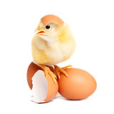 Cute chicken on eggs Royalty Free Stock Image