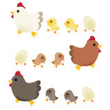 Cute Chicken -. Vector File EPS10 Stock Photo