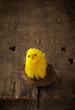 Cute chicklet in a nest Royalty Free Stock Image