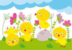 Cute chicks Royalty Free Stock Photos