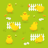 Cute chicks stock illustration